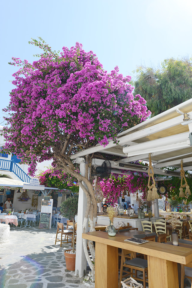 Shop and Twirl | Moments from Mykonos 13